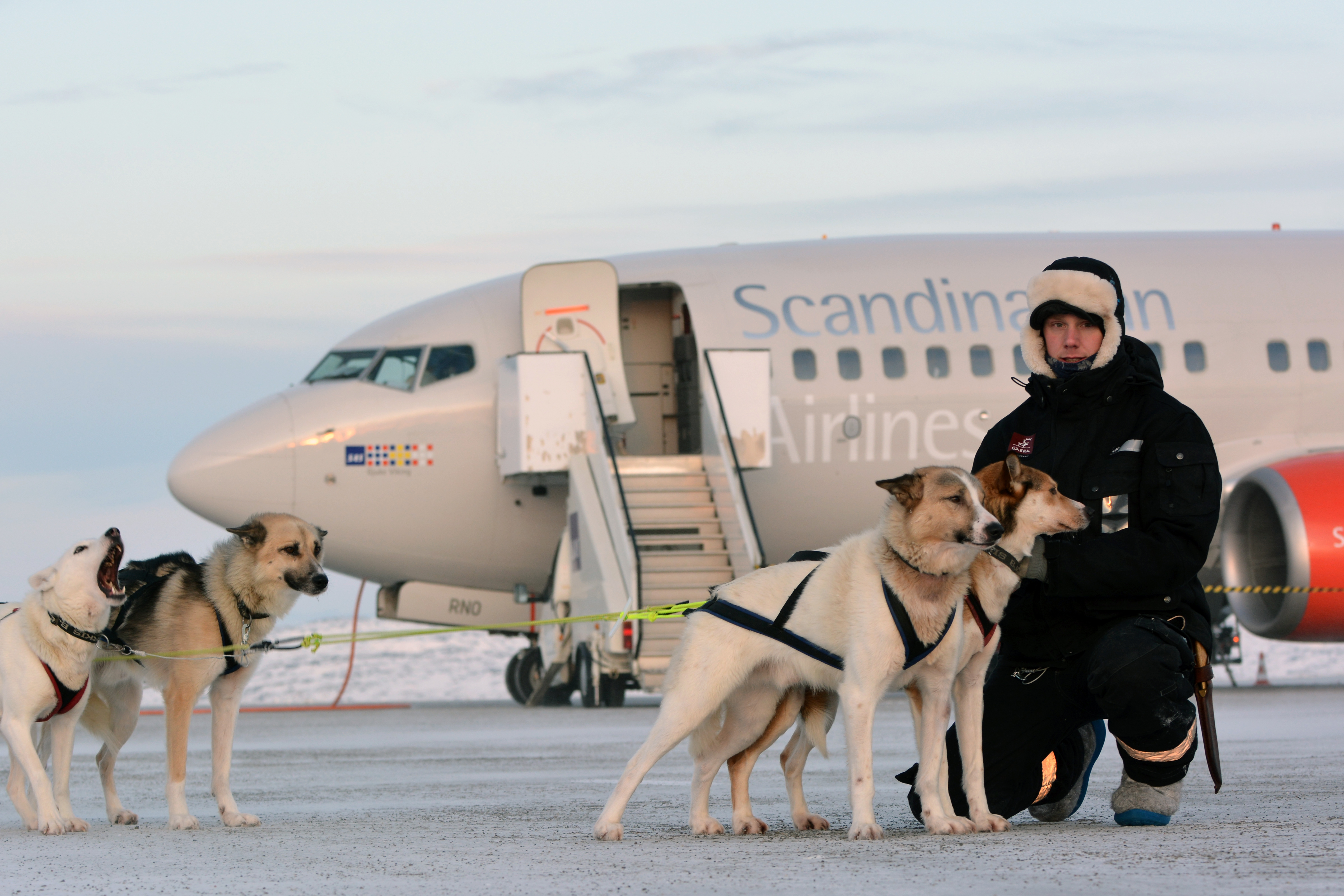 airport dog sled taxi service barentsobserver